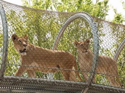 不锈钢绳网 狮子笼舍网