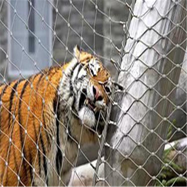 不锈钢绳网 动物园建设用网
