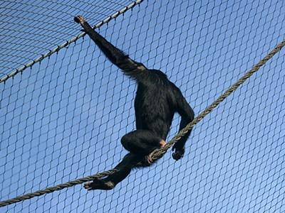 不锈钢绳网 猩猩笼舍网
