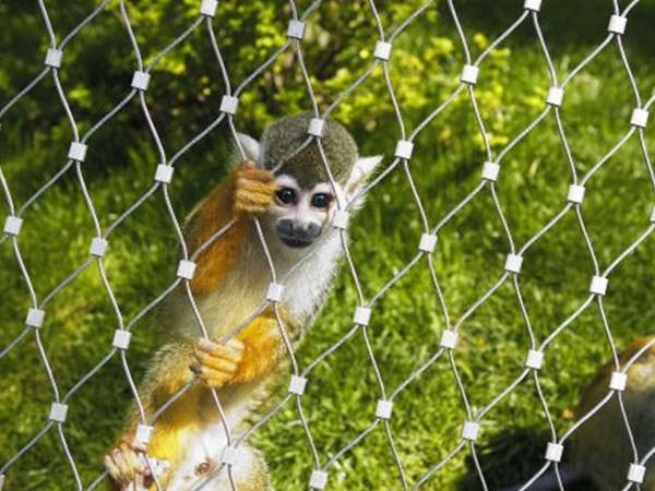 海南不锈钢绳网 猴子笼舍网