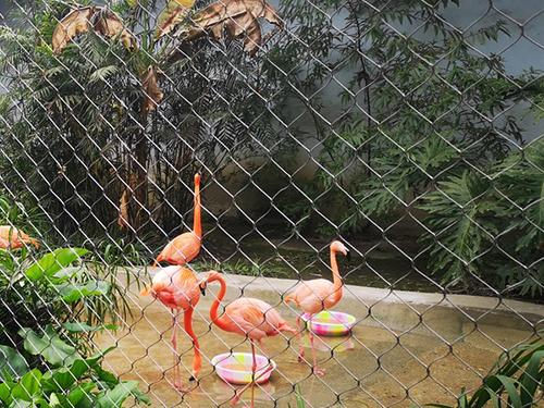 重庆动物园火烈鸟笼舍围网效果图