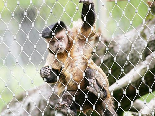 动物园猴子围网 不锈钢笼舍网
