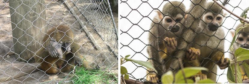 动物园猴子围网 笼舍网