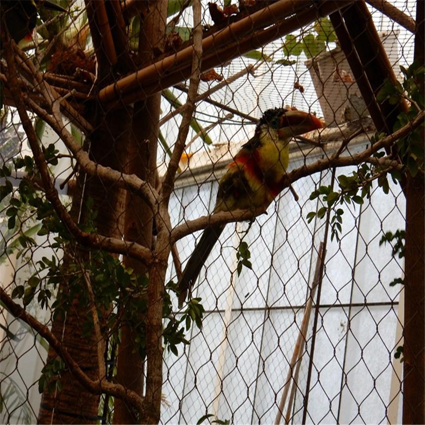 不锈钢绳网用于鸟语林的优势
